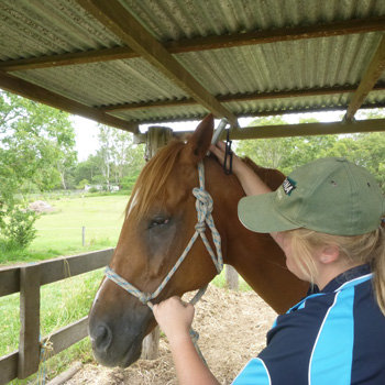 Equine Photonic Therapy